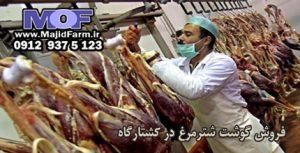 فروش گوشت شترمرغ در کشتارگاه