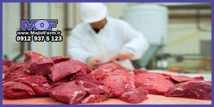 فروش و عرضه گوشت شتر مرغ