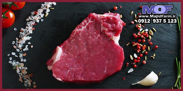 فروش گوشت شتر مرغ برای پخش کنندگان